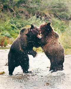 Fighting Grizzlies