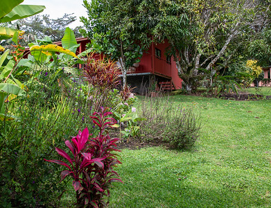 View our our Casita from the Orange Tree in the backyard.