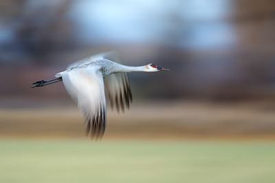 Use a slow shutter speed for unique images of flying birds.