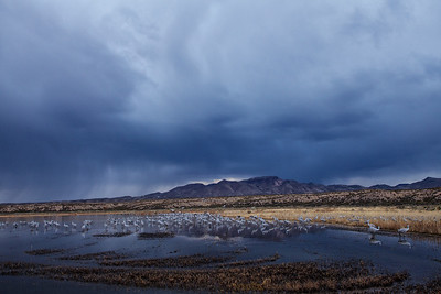 Early morning image of a sandhill crane roost pond.