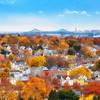 Tobin Bridge over Boston Suburbs with Fall Foliage and Blue Sky from Waitt's Mountain Malden Massachusetts