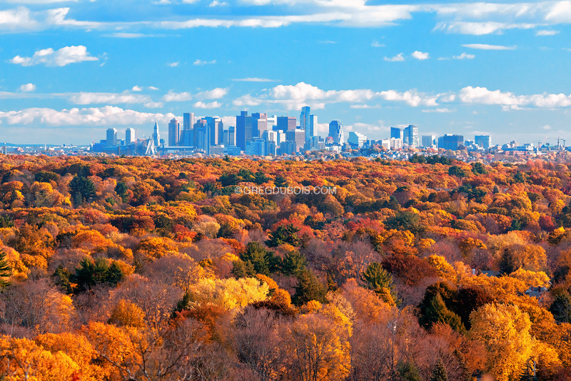 Downtown Boston Skyline over Fall Trees during Golden Hour from Woburn Massachusetts
