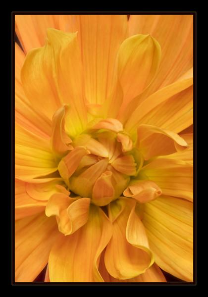 Orange Climax