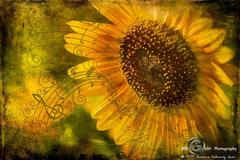 Singing of Summer