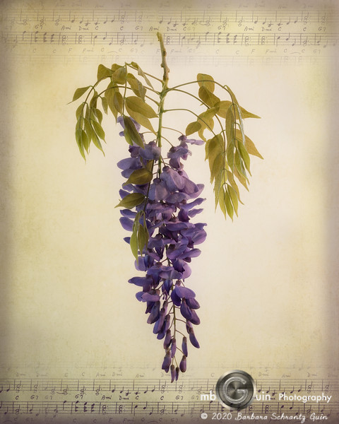 Hints of Wisteria