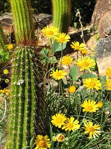 Arizona-Sonora Desert Museum (15)