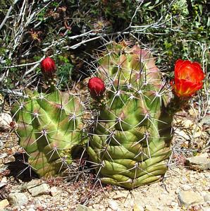 Arizona-Sonora Desert Museum (36)