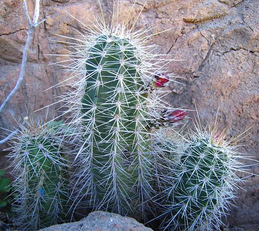 Arizona-Sonora Desert Museum (7)