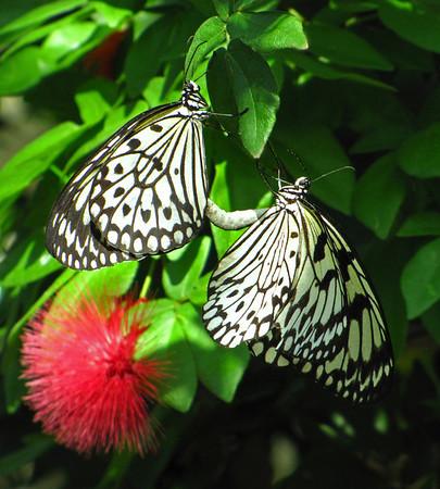Callaway Gardens (Day Butterfly Garden)  (2)