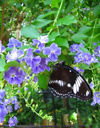 Callaway Gardens (Day Butterfly Garden)  (6)