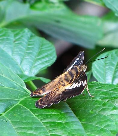 Callaway Gardens (Day Butterfly Garden)  (3)