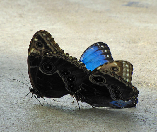Callaway Gardens (Day Butterfly Garden)  (5)