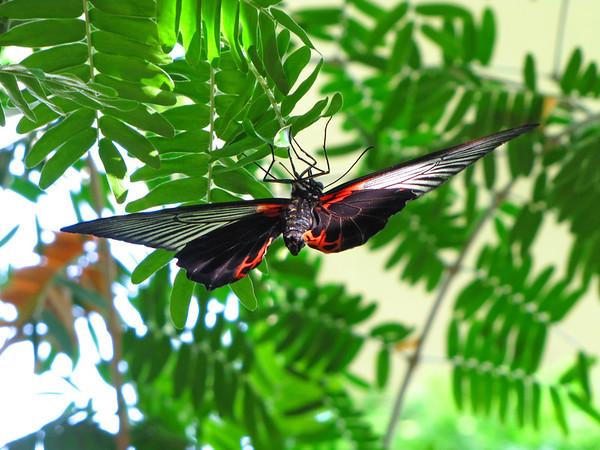Callaway Gardens (Day Butterfly Garden)  (4)
