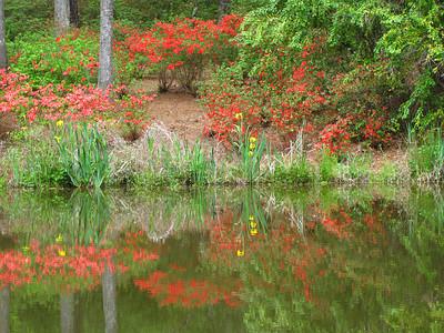 Callaway Gardens Landscape  (2)
