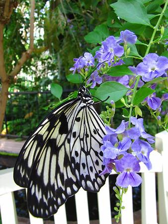 Callaway Gardens (Day Butterfly Garden)  (1)