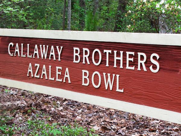 Callaway Gardens (azalea) (1)