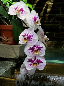 Lewis Ginter Botanical Garden (19)