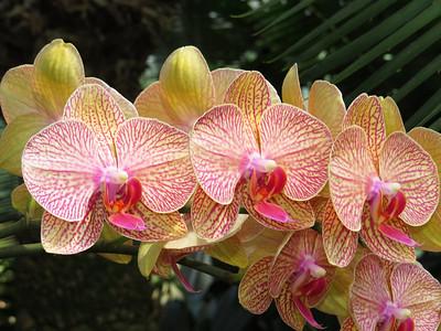 Lewis Ginter Botanical Garden (10)