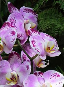 Lewis Ginter Botanical Garden (20)