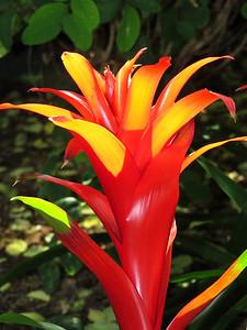 Lewis Ginter Botanical Garden (8)