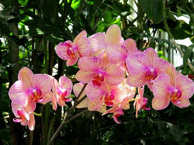 Lewis Ginter Botanical Garden (12)