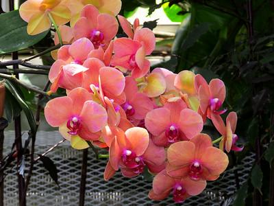 Lewis Ginter Botanical Garden (13)