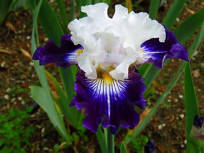 Memphis Botanic Garden (20)
