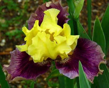 Memphis Botanic Garden (14)