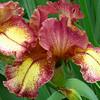Memphis Botanic Garden (39)