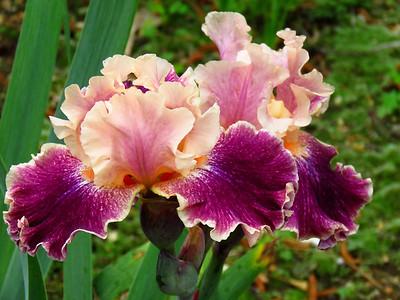 Memphis Botanic Garden (16)