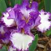 Memphis Botanic Garden (47)