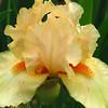 Memphis Botanic Garden (45)