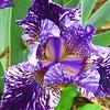 Memphis Botanic Garden (34)