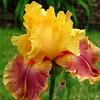 Memphis Botanic Garden (44)