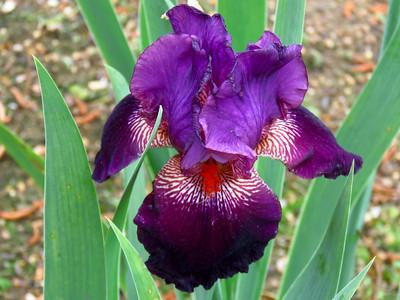 Memphis Botanic Garden (19)