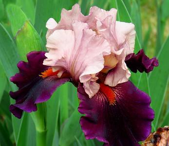 Memphis Botanic Garden (25)