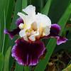 Memphis Botanic Garden (50)