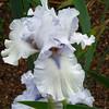 Memphis Botanic Garden (46)