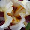 Memphis Botanic Garden (49)