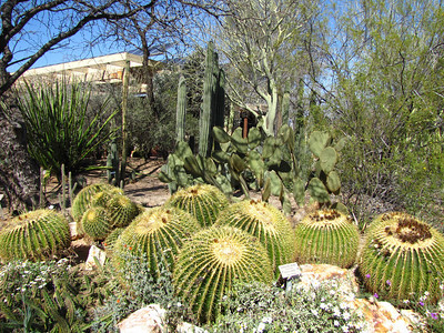 Tucson Botanical Gardens (22)