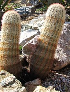 Tucson Botanical Gardens (30)