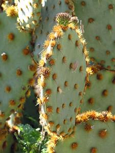 Tucson Botanical Gardens (28)