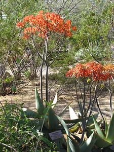 Tucson Botanical Gardens (12)
