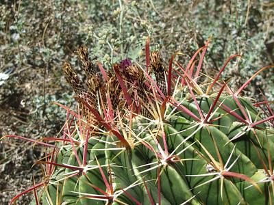 Tucson Botanical Gardens (25)