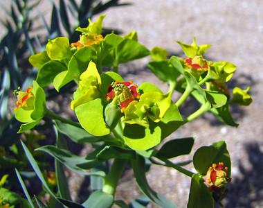 Tucson Botanical Gardens (36)