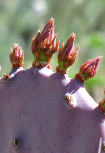 Tucson Botanical Gardens (35)
