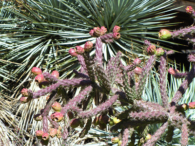 Tucson Botanical Gardens (10)
