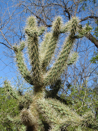 Tucson Botanical Gardens (8)