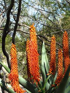 Tucson Botanical Gardens (11)
