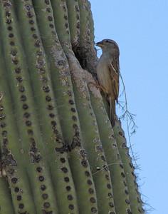 Tucson Botanical Gardens (37)